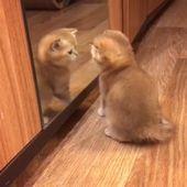 Zehn beispiellose Gründe, warum Katzen großartige Haustiere sind #cat #catlover #catfacts #ilovecats #cats    – So niedlich