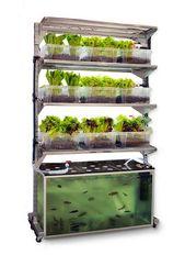 Salat in der wohnung anbauen; Gesundes Leben e.v.;