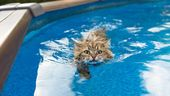 Top 10 Cat Breeds Who Love Water – Tiere