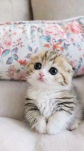 #chat #chaton #mignon #kitten #cute   – Alles
