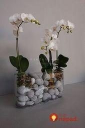 Seit ich die Orchidee ins Glas stecke, blüht sie seit Monaten: – #blüht #Die #…