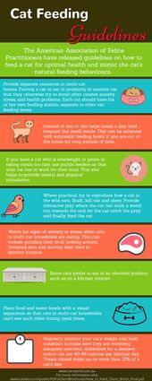 Cat feeding guidelines