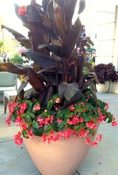 Container gardening and Pot Concepts, uncover the gardening put up plan quantity 67640…