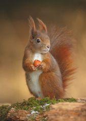 Fantastische Tiere: weniger bekannte Wildtiere, die es wert sind, beobachtet zu werden