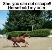 Funny horse sliding video