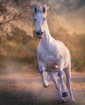 Pin By Sarah On Horses Beautiful Horses Photography Horses Animals Beautiful