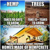 Hanfbäume Holz für die Herstellung von Häusern und Obdach. #hemp #cbd #cannabis #cbc #h … – Lustige witze