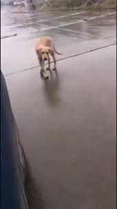 これは、犬がストリートミュージックに「踊る」かわいいビデオではありません。それは悲しいビデオです…   – Hunde