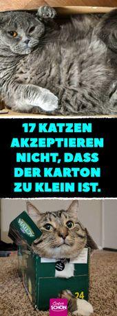 17 Katzen akzeptieren nicht, dass der Karton zu klein ist. #katzen #kartons # bo…