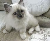 """""""An inquisitive little kitten is the best reminder of what youth is all about."""" …"""