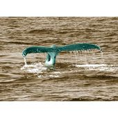 East Urban Home Glass Picture Animals Whale Tail, photo print in blue-green
