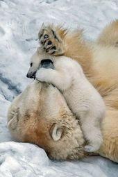 Hey, ich weiß, ich bin winzig im Vergleich zu dir! … werde ich ein … – #animals #compared #HEY sein