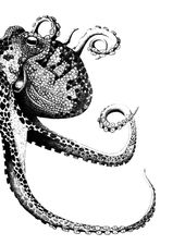 Hej!  Hier kommt JURA der Oktopus aus der von ERIKA Familie. Der gute Kerl ist natürlich mit Bleistift gezeichnet worden. Diese Zeichnung gibt es nun…
