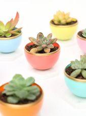 29 DIY Succulent Planter Ideas: Creative Ways to Display Succulents | Homelovr