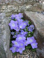(notitle) – Rock Flower's ♡