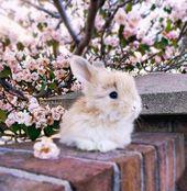Niedliche Kaninchenphotographie.