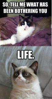 30 mürrische Katze lustige Zitate   – Funny :D