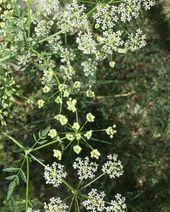 6423926464510c28ea614e282d38e3e0 - [New] The 10 Best Home Decor Today (with Pictures) -  Böcekler harıl harıl çalışıyor. #garden...