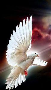 Ich wünsche euch von Herzen, dass Frieden, Liebe und Freude in euer Zuhause und in euer Leben kommen. Fröhlichen Palmsonntag. .. Vi auguro di cuore …