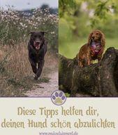 Tipps für Anfänger: Hundefotografie – fangen Sie den richtigen Moment ein | Ma…