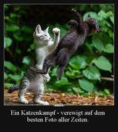 Ein Katzenkampf – verewigt auf dem besten Foto aller.. | Lustige Bilder, Sprüch… – Deko