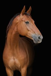 Horse portrait – Aurore Bourdin