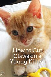 Trimming Kitten Claws Kitten Adoption Feeding Kittens Kitten Proofing