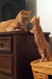 Tippen Sie zweimal auf dieses Foto, um sich Collins I-Katzenpalast anzuschließen. Eine Alleskatzengruppe o …   – Kätzchen