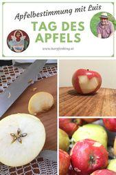 Apfelbestimmung für den Tag des Apfels, ein Apfel hat 90 Eigenschaften – mancher Apfel ist rätselhaft   – Teichanlage & Streuobstwiese