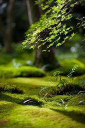 Naturbilder: schöne #Naturbilder #Natur #SinndesL…
