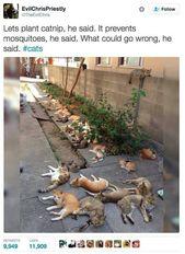 32 Tweets über Katzen, die zum Lachen bringen