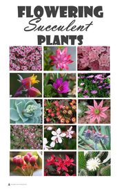 Blooming succulents – succulents with flowers   – Blumen Pflanzen