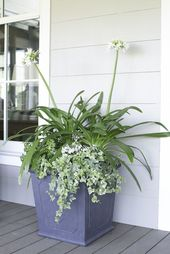 23 Superb Container Gardening Preparations For Lazy, Forgetful & Busy Gardeners