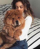 7 mejores razas silenciosas y de bajo consumo de teleadicto   – Hunde Bilder