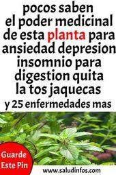 pocos saben el poder medicinal de esta planta para la ansiedad depresión insomnio p …  – Remedios caseros