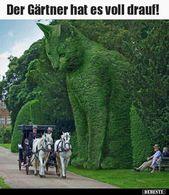 Photo of Der Gärtner hat alles! ..   Lustige Bilder, Sprüche, Witze, wirklich lustig