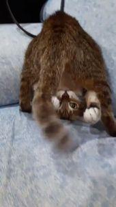 Lustige Katze 😂 –   – Katzen