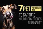 7 Tipps zum Fotografieren von Haustieren, um die Persönlichkeit Ihrer vierbeinigen Freunde einzufangen   – Photography info
