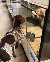Pointer encounters birds at the pet store