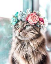 60 divertidos animales peludos para alegrar tu día   – Tiere Bilder