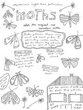 Free Printable Coloring Page And Fact Sheet About Moths Nature