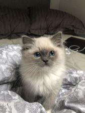 Pictures de chats mignons: Moi depuis 20 ans: Maman, pouvons-nous avoir un chat? M…