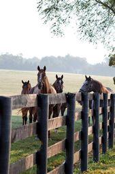 Entdecken Sie Lexington, Kentucky – #country #Entd…