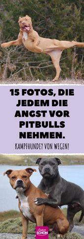 15 fotos que todos toman el miedo a los pit bulls. #dog #dogs #dogdog #pitb …   – Tiergeschichten