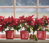 Photo of 20 schöne Fensterbank-Dekorationsideen für Weihnachts- und Silvesterparty