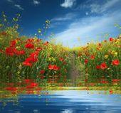 Florezinhas Transparentes S Izobrazheniyami Cvety Animaciya Pticy