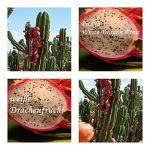 Tier Zaun Hornbach 2020 Drachenfrucht Terrassenpflanzen Garten