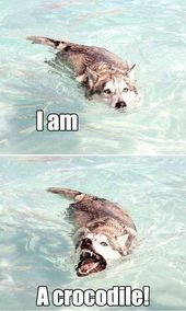 Read these Funny Dog Memes #pure #humor #hilarious puppies