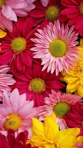 iphone fondo de pantalla Papel pintado bonito de la flor para Iphone | Fondos de pantalla 3D # fashionlife #fashionstylist # …