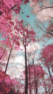 Verträumte Landschaft, rosa blaue Bäume, surreale Foto Natur, Infrarot-Fotografie, Pastell Wa…